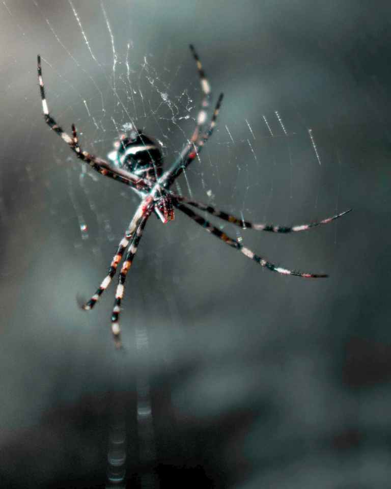 close up photo of spider