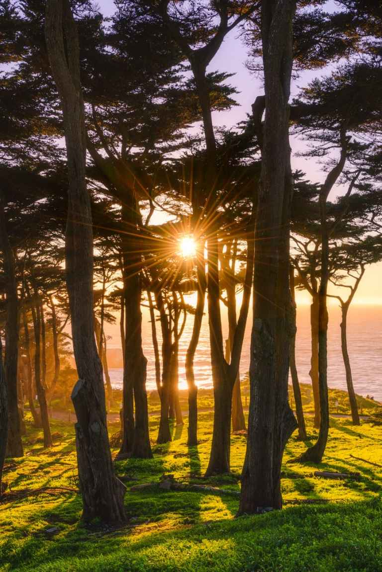 photography of trees beside shore during sunset